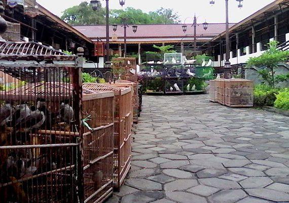 Pasar Depok yang memuaskan hobi pecinta burung